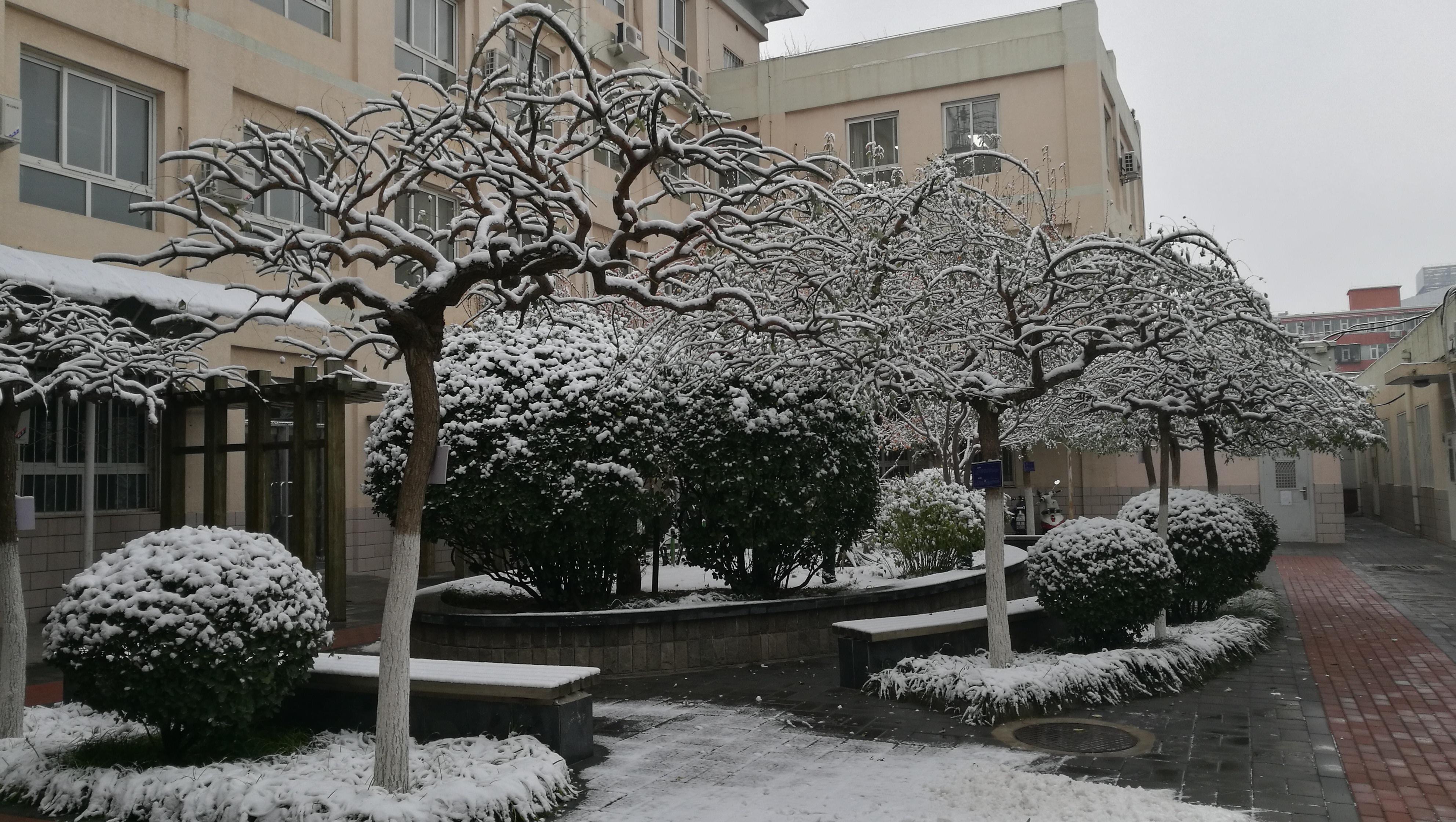 龙抓槐(2012年3月栽种。冬季).jpg