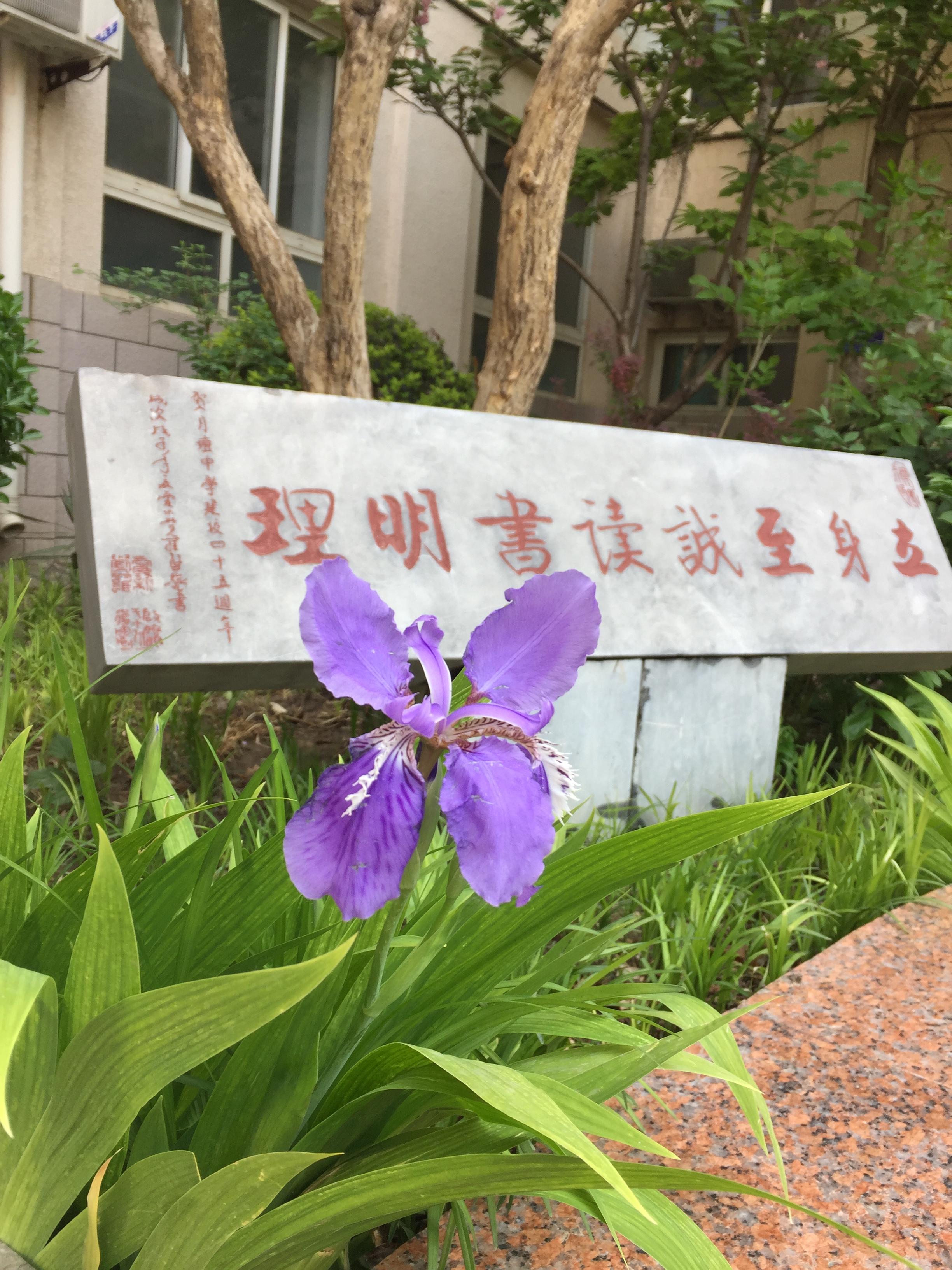 鸢尾花(2015年4月栽种).jpg